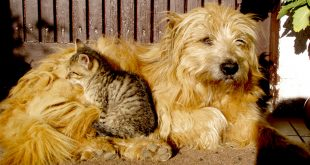 Stray cats and dogs and how to help