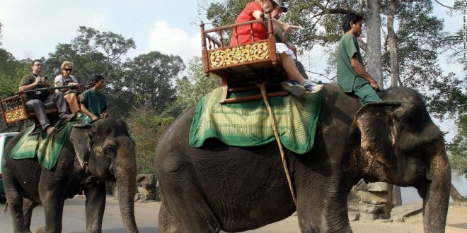Cambodia to ban elephant rides at Angkor Wat